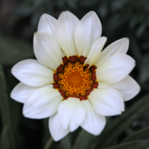 whiteflower